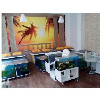 fish-spa-party-fur-6-personen-cottbus