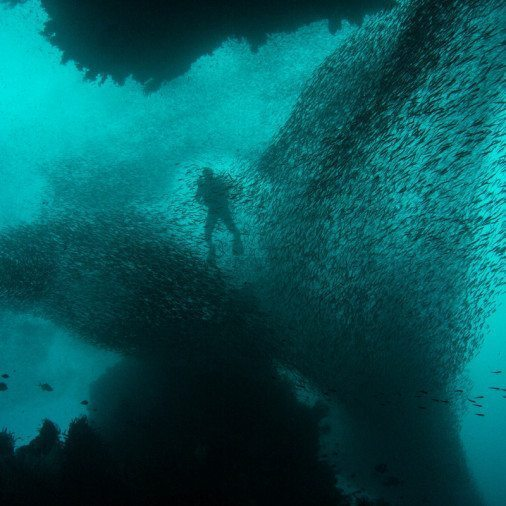 Specialty Course Wreck Diving 1
